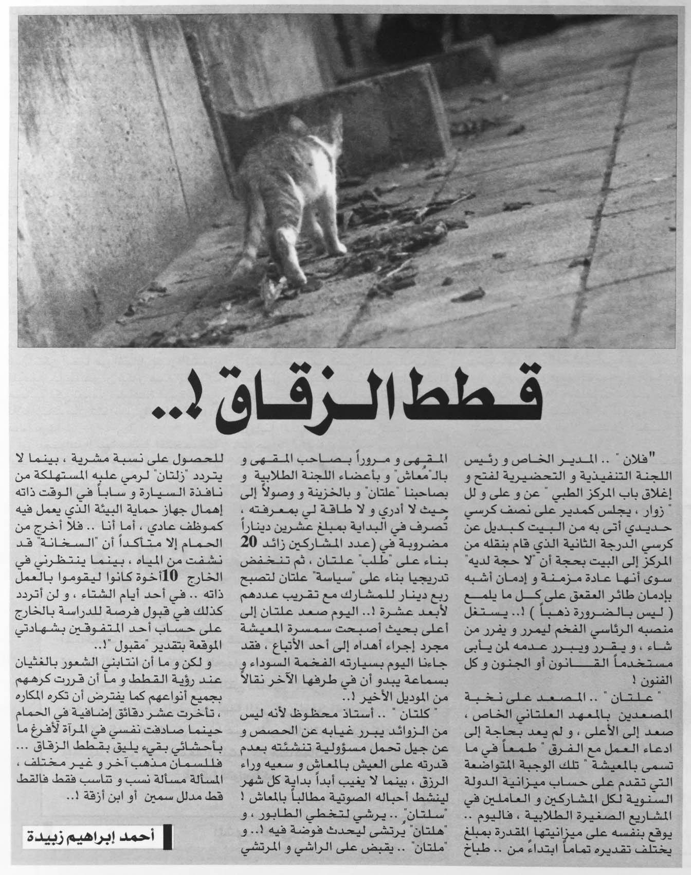 قطط الزقاق، صحيفة أويا، أغسطس 2008